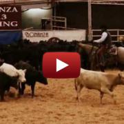 Video: CR Sun Reys and Boyd Rice